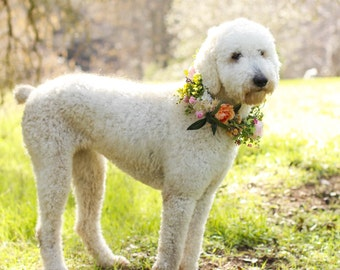 Dog flower crown, dog flower collar, puppy flower crown, puppy flower collar, flower crown