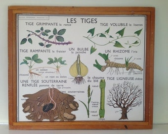 French Vintage Double-Sided School Poster - The Stems & Adventurous Roots
