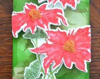 Pretty Poinsettias