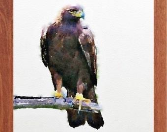 Falcon painting, bird painting, wildlife watercolour, wildlife wall art, digital print.