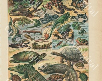 Reptile Wall Art, Reptile Print, Printable Wall Art, Antique Print French Encyclopedia Snakes, Crocodiles, Lizards