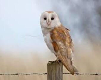 Owl with Grey Sky