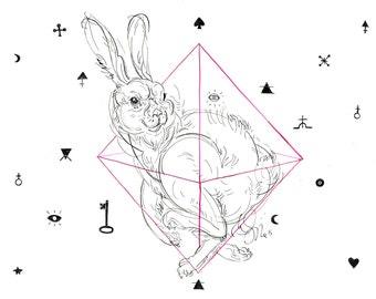 bunny_geometric_magic