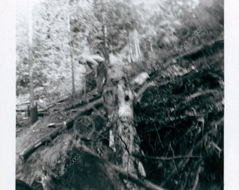 This does not look safe. - Tree - Land Clearing - Woods- Vintage Snapshot - 1960s 1970s