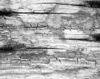 Wood, Fine Art Photography, Black & White Photography, Stock Photo, Home Decor, Greeting Card Photo