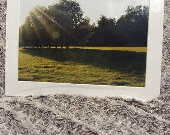 Sunshine glare picture of a woodland