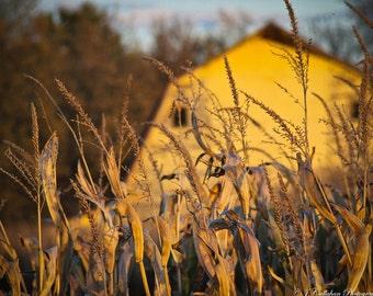 A Barn Among Corn - Fall