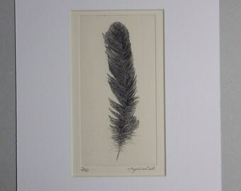 Feather 4, Drypoint Etching, Limited Edition of 10, 2015 - Feathers Serie