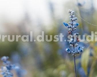 Blue Flower Mist