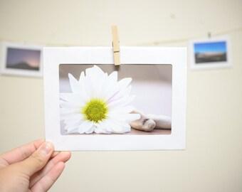 Photo Card: Daisy
