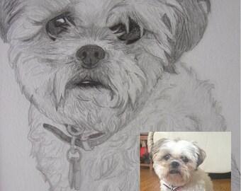 Custom Pet Portrait, Custom Dog Portrait, Original Art, Made to Order, Dog Art, Pet Art, Gift Art, Custom Hand Drawn Dog Portrait Sketch