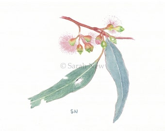 Ironbark Blossom Print - Australian Botanical Studies