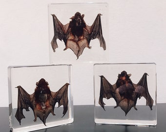 Taxidermy Bat Paperweight