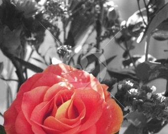 Sunlit Rose Fine Art Photography Print