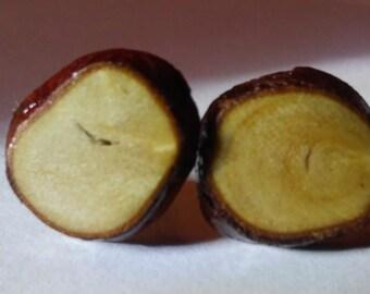 cypress knee earrings