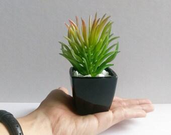 Mondern Faki Mini-Succulent