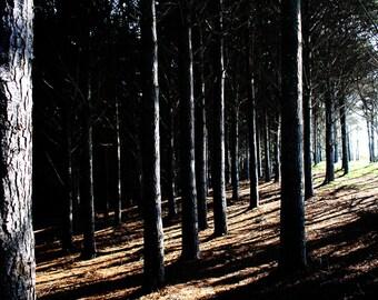 Pines.
