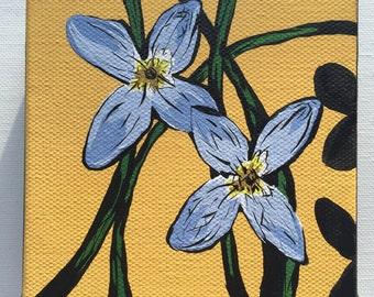 Bluets Blooms
