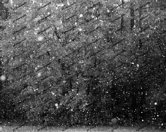 Snowy Woods Print