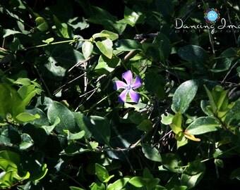 Lone Little Flower