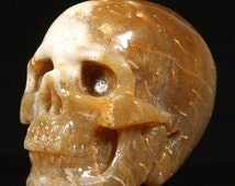 Realistic Coral Fossil Carved Crystal Skull - HandMade