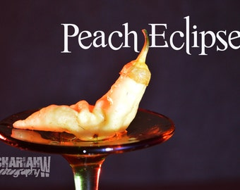 Peach Eclipse (15+ Seeds)