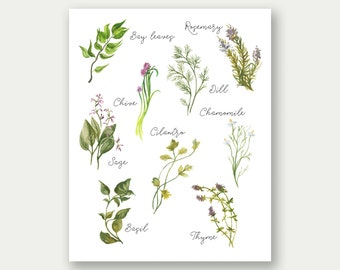 Culinary Herbs Printable, Kitchen Art, Herbs Collection, Herbs Wall Art, Culinary Decor, Kitchen Printable, Gourmet Print, Culinary Art
