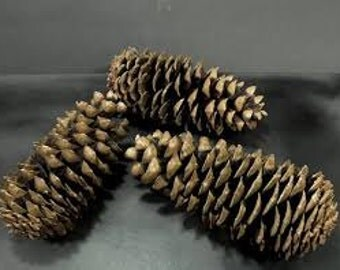 large  pinecones, natural pinecones, home decor