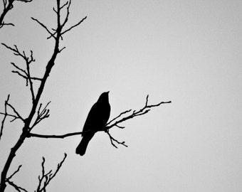 ORIGINAL PHOTOGRAPHY bird silhouette 5x7 photograph //