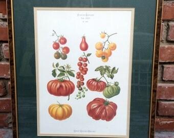 Garden Art, Heirloom Tomatoes Litho in nice frame
