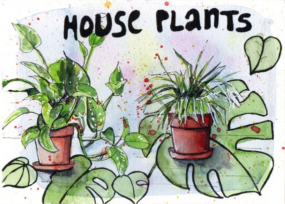 House Plants - Pen and Watercolour Painting