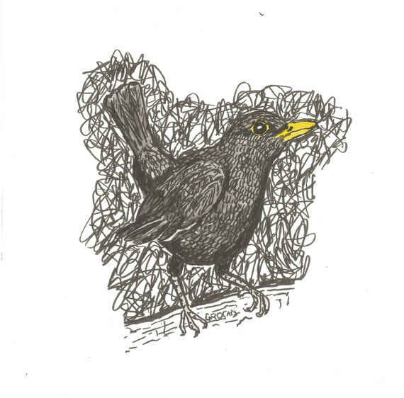Original Blackbird drawing. Pen and ink with watercolour gift