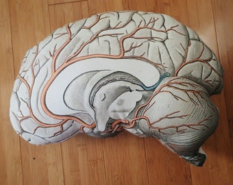 Anatomical Brain Pillow