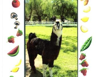 Llama Country Cookbook