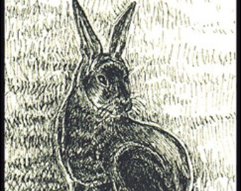 Jackrabbit   (#407)