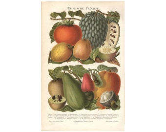 Original lithographic print 1894, colored antiquarian wall chart tropical fruits, Illustration , antique lithography
