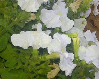 Flowers In Bloom 4