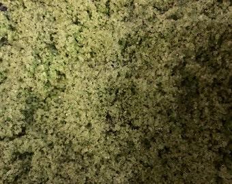 Matcha Green Tea Sugar Scrub