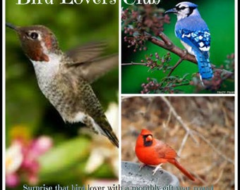 Bird Lovers Club