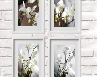 set of 4 photographs of orchids from 40 euro; photography, floral nature, nature decor.