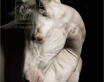 Andalusian Foal, Fine Art Print, Equine Photography