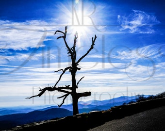 Blue Ridge Mountain Beauty
