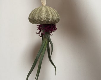 Sea Urchin/Air Plant Jellyfish Ornament