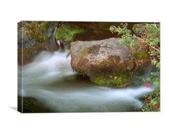 Fuschia by a Stream Canvas Print