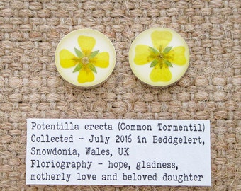 Common Tormentil Flower Stud Earrings. Sterling Silver 925 Botanical Earrings with real flower specimen.