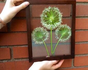 Pressed Flower Art- Three's Company