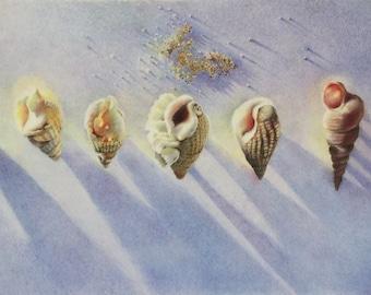 Shell Study 2