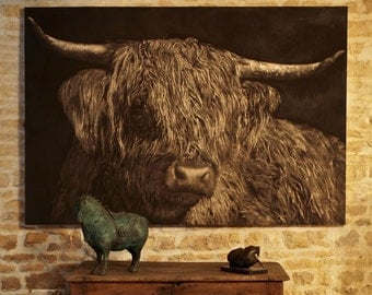 Highland Cattle cow Cow