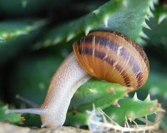 G13 - Snail in Succulent
