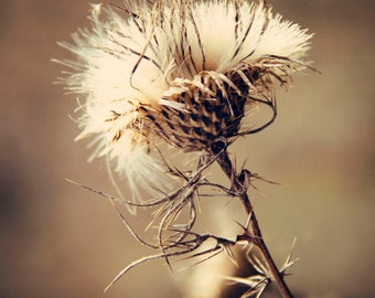 Thistle Print, Fine Art Photography, Nature Photography